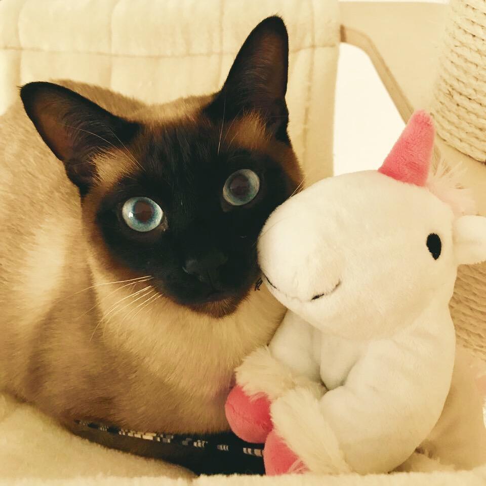 Katze Einhorn Siamkatze Plüschtier Plüscheinhorn Haustier Kuscheltiere Cat