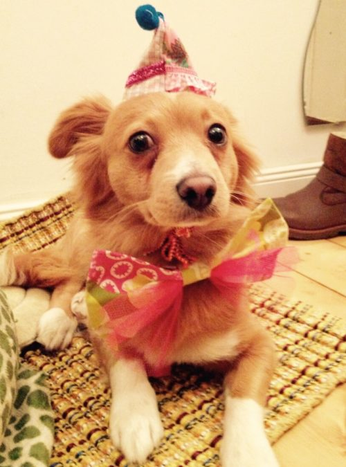 Hund Vermenschlichung Haustiere Verkleidet Hund mit Hut Hund mit Fliege