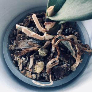 Braunzeug Pflanzen grüner Daumen