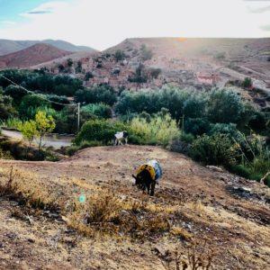 Marrakesh Marokko Atlasgebirge Suqs