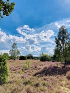 Heimreise Deutschland Deutschlandtour Urlaub daheim Heide Sommer Natur