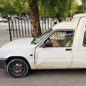 Corona Hund am Steuer witzig Schellenaffe Corona